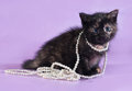 Tricolor Fluffy Kitten With Beads Around Neck Sits On Purple Stock Photo - 43179340