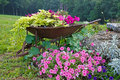 Wheelbarrow With Flowers Stock Image - 43188251