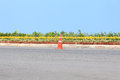 Traffic Cone On Road With Flower And Seascape As Background Royalty Free Stock Photo - 43199665