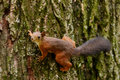 Squirrel Sitting On A Tree Royalty Free Stock Photography - 43206777