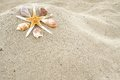 Starfish And Shells Stock Images - 43207874