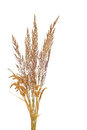 Dry Grass Royalty Free Stock Image - 43210456