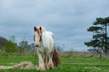Horse Royalty Free Stock Photography - 43215547