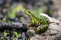Frog Sitting On A Stone Stock Image - 43216441