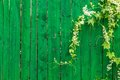 Green Wooden Fence And Plant Stock Photo - 43227210