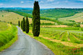 Vineyard Hills And Cypresses Stock Images - 43265494
