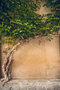 Cement Wall And Tree Ivy Royalty Free Stock Photos - 43267728