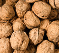 Walnuts Royalty Free Stock Photography - 4331227