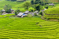 Rice Field Terraces  Royalty Free Stock Photos - 43332298