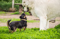 Playing Dogs Stock Photos - 43374133