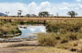 River In Tanzania With Hippos Stock Image - 43376801