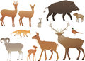 Forest Animals Royalty Free Stock Photo - 43384245