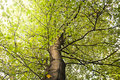 Tree Branches Royalty Free Stock Photos - 43450768