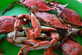 Boiled Crabs Stock Photography - 43463642