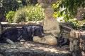 Dog And Cat Rest On A  Buddha Statue On Stone Steps Stock Images - 43480994