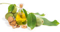 Walnut Oil With Ripe And Unripe Walnuts Stock Images - 43483934