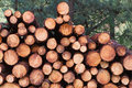 Stacked Timber Logs Royalty Free Stock Images - 4351789