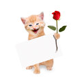 Cat With Red Rose And Banner Isolated Royalty Free Stock Images - 43515919