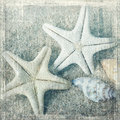 Shells And Starfish Royalty Free Stock Photography - 43531217