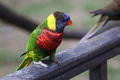 Colorful Parrot Stock Photography - 43532562
