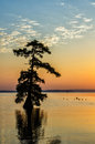 Bald Cypress Trees, Reelfoot Lake, Tennessee State Park Stock Photography - 43618892