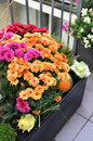 Mix Of  Beautiful Flowers In The Fall Terrace Garden Royalty Free Stock Images - 43632229