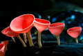 Mushroom Champagne In The Forest Royalty Free Stock Photos - 43657968