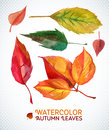 Watercolor Autumn Leaf Set. Illustration Collection Of Watercolor Hand Drawn Leaves. Royalty Free Stock Photography - 43703067