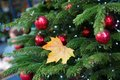 Yellow Leaf On A Branch Of Christmas Tree Stock Image - 43782731
