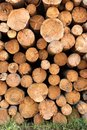 Woodpile Of Cut Lumber Royalty Free Stock Photography - 43797337