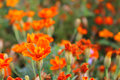 Flowers Royalty Free Stock Images - 43802329