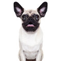 Surprised Crazy Dog Stock Images - 43833714