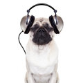 Dog Music Royalty Free Stock Photos - 43833868