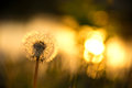 Beautiful Background With Dandelion Stock Images - 43845264