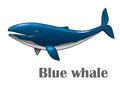 Cartoon Blue Whale Royalty Free Stock Images - 43848919