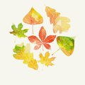 Autumn Background With Leaves Stock Images - 43897244