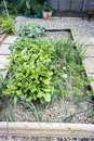 Vegetable Patch Royalty Free Stock Images - 43915949