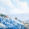 Frozen Grass Royalty Free Stock Images - 43926499