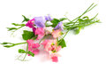 Sweet Peas Stock Images - 43963274