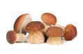 Group Of Mushrooms Royalty Free Stock Images - 43963309