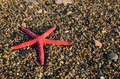 Red Starfish Stock Image - 43973691