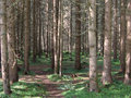 Thick Forest Stock Image - 4400051