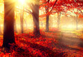 Beautiful Autumnal Park In Sunlight Royalty Free Stock Photo - 44010465