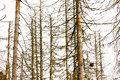 Dead Trees Royalty Free Stock Images - 44013339