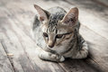 Stray Cat Portrait Post On The Wooden Stock Images - 44015904