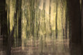 Abstract Forest Stock Photo - 44022310