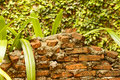 Brick Wall In Front Of Ivy On Wall Stock Photo - 44032980