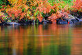 Colorful Autumn Ferns Water Reflection Stock Images - 44038644