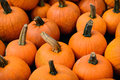 Group Of Pumpkins Stock Photos - 44038733