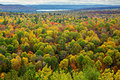 Colourful Tree Tops In An Autumn Forest Royalty Free Stock Photos - 44038768